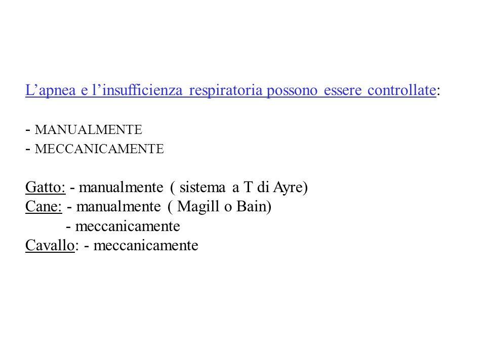 Lapnea e linsufficienza respiratoria possono essere controllate: - MANUALMENTE - MECCANICAMENTE Gatto: - manualmente ( sistema a T di Ayre) Cane: - ma
