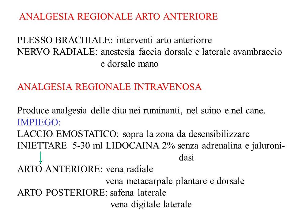 ANALGESIA REGIONALE ARTO ANTERIORE PLESSO BRACHIALE: interventi arto anteriorre NERVO RADIALE: anestesia faccia dorsale e laterale avambraccio e dorsa