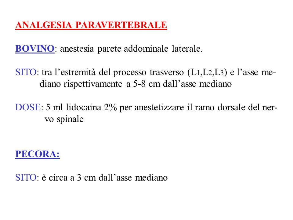 ANALGESIA PARAVERTEBRALE BOVINO: anestesia parete addominale laterale. SITO: tra lestremità del processo trasverso (L 1,L 2,L 3 ) e lasse me- diano ri