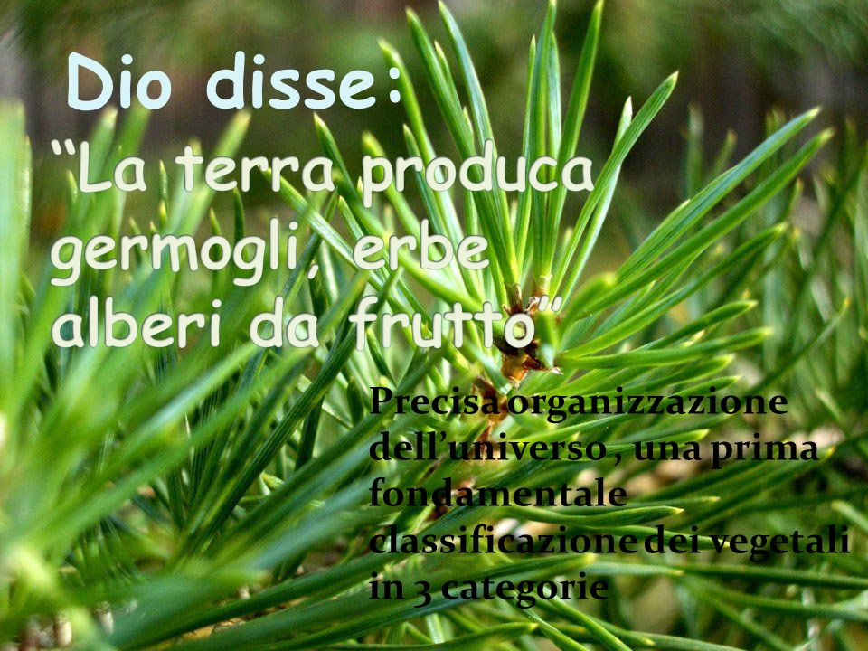 Dio disse: Precisa organizzazione delluniverso, una prima fondamentale classificazione dei vegetali in 3 categorie