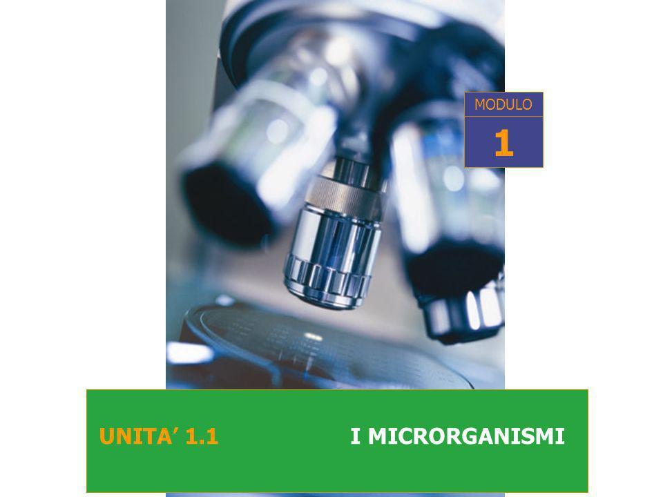 UNITA 1.1 I MICRORGANISMI MODULO 1