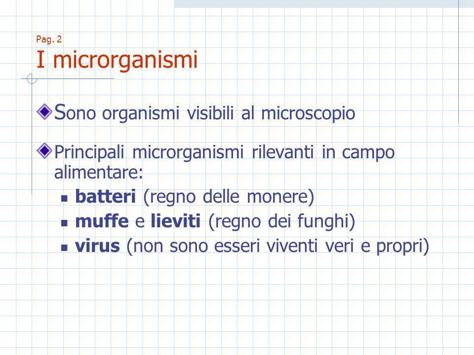 Pag. 2 I microrganismi S ono organismi visibili al microscopio Principali microrganismi rilevanti in campo alimentare: batteri (regno delle monere) mu