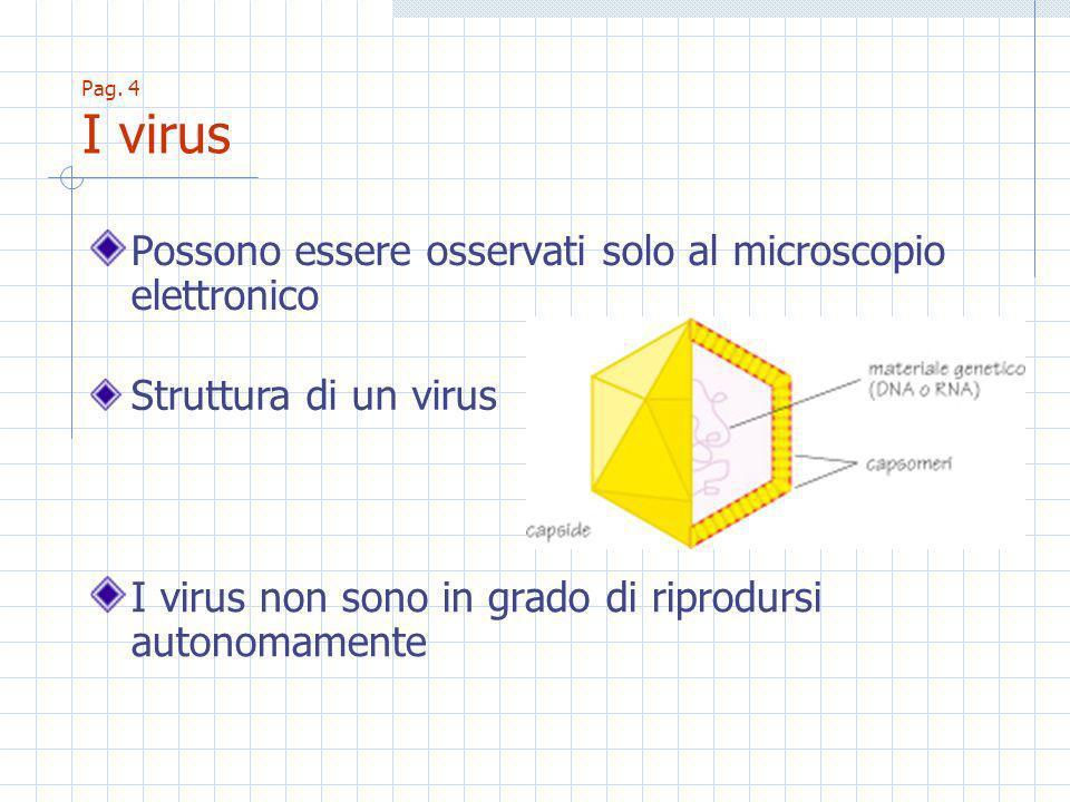 Pag. 4 I virus Possono essere osservati solo al microscopio elettronico I virus non sono in grado di riprodursi autonomamente Struttura di un virus