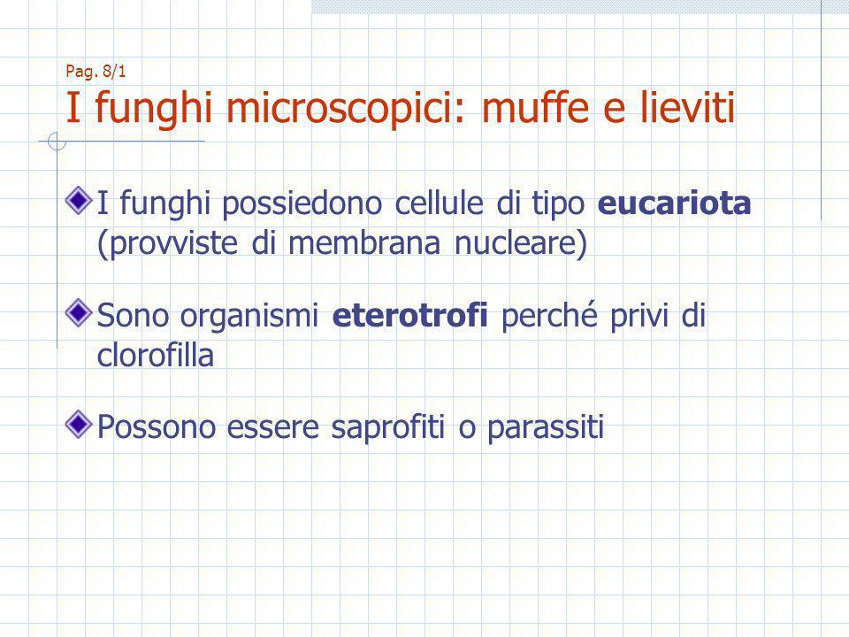 Pag. 8/1 I funghi microscopici: muffe e lieviti I funghi possiedono cellule di tipo eucariota (provviste di membrana nucleare) Sono organismi eterotro