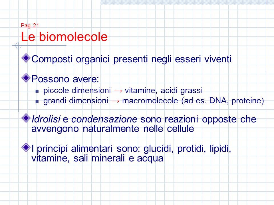 Pag. 21 Le biomolecole Composti organici presenti negli esseri viventi Possono avere: piccole dimensioni vitamine, acidi grassi grandi dimensioni macr