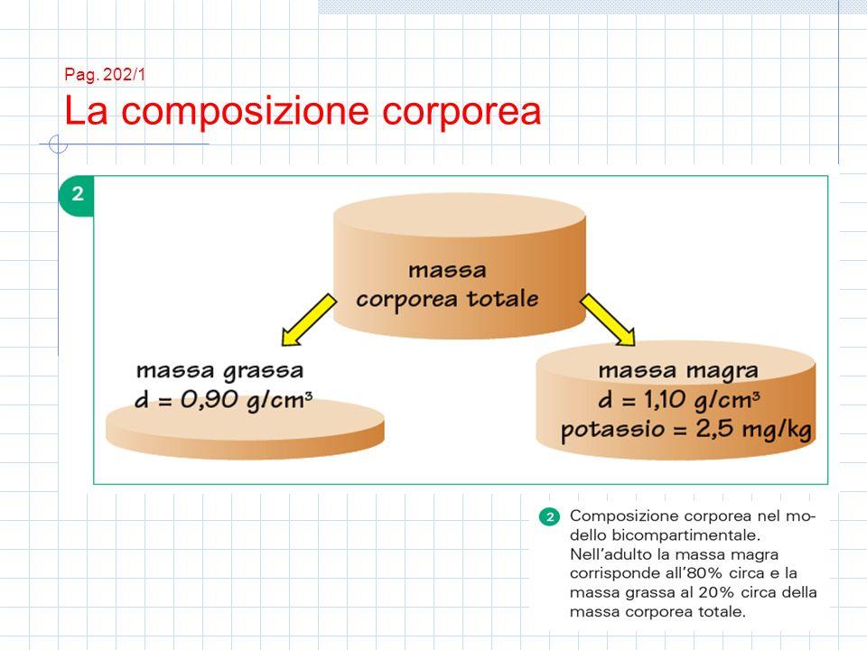 Pag. 202/1 La composizione corporea