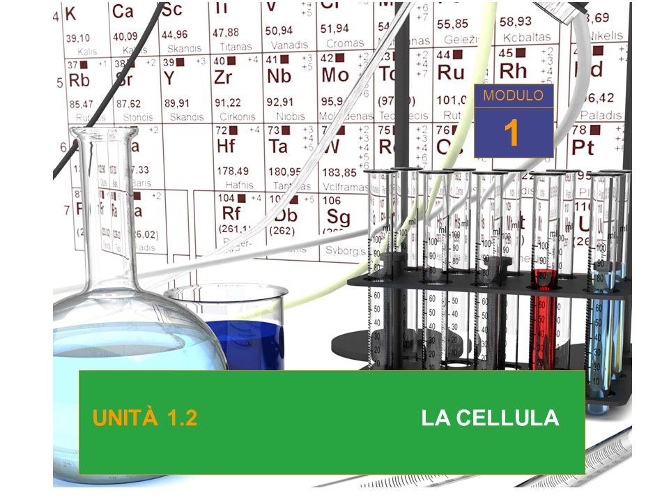 UNITA 1.2 LA CELLULA 1 MODULO UNITÀ 1.2 LA CELLULA 1 MODULO