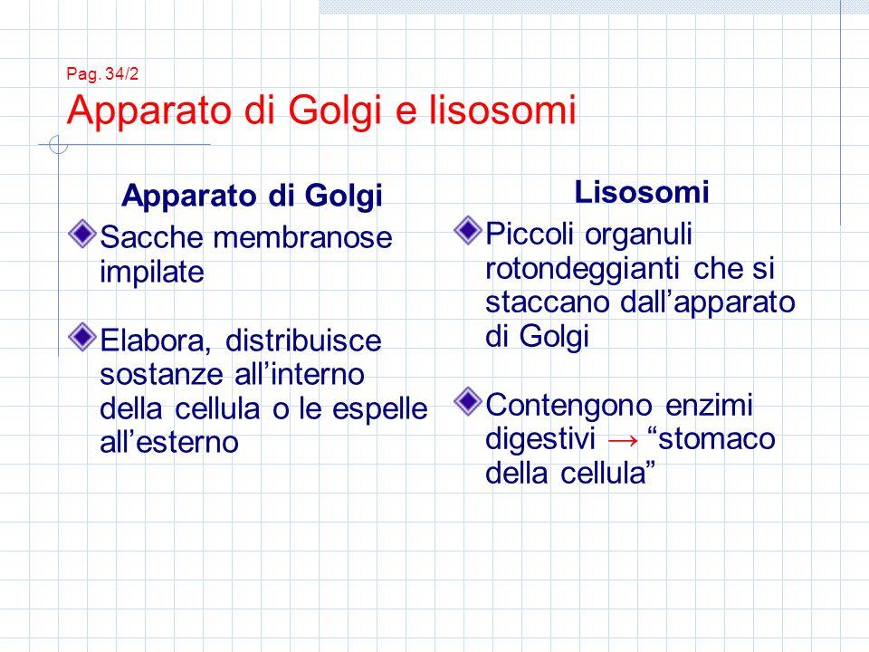 Pag. 34/2 Apparato di Golgi e lisosomi Apparato di Golgi Sacche membranose impilate Elabora, distribuisce sostanze allinterno della cellula o le espel