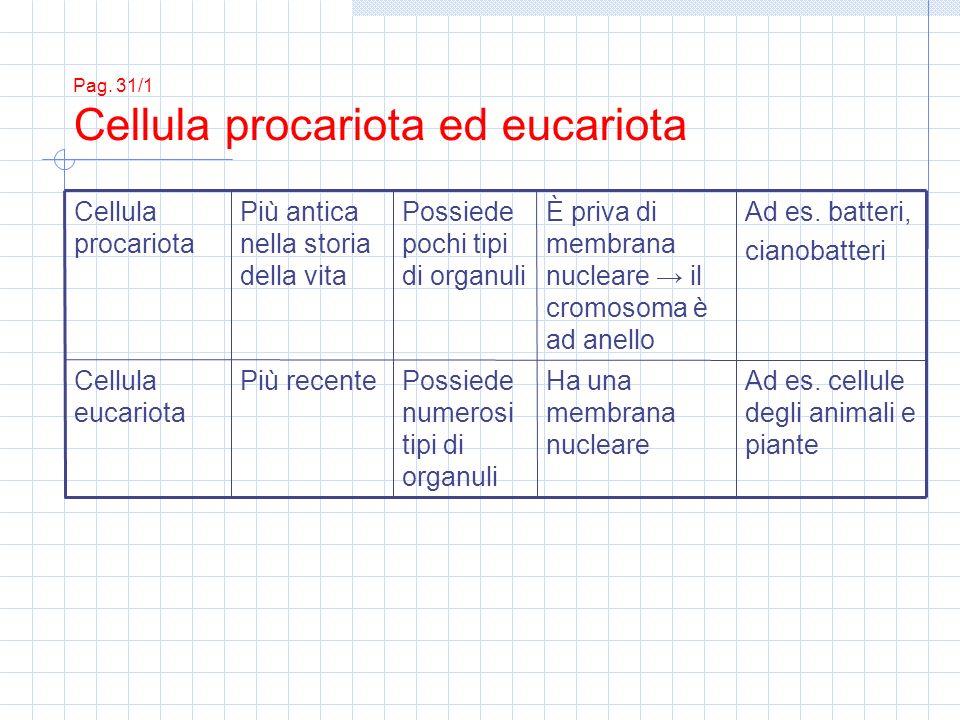 Pag. 31/2 Cellula procariota
