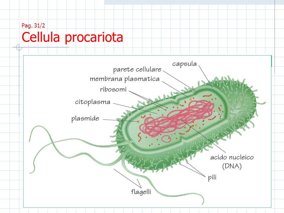 Pag. 32/1 I costituenti cellulari (cellula animale)