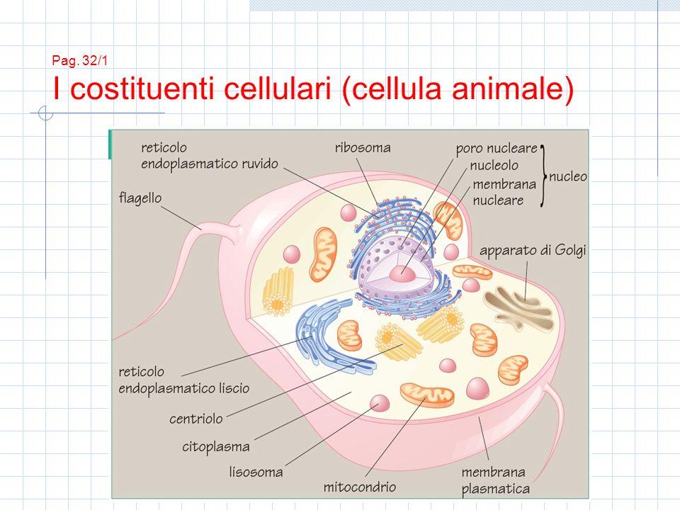 Pag. 32/2 I costituenti cellulari (cellula vegetale)