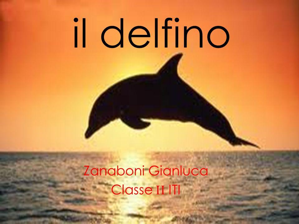 il delfino Zanaboni Gianluca Classe II ITI