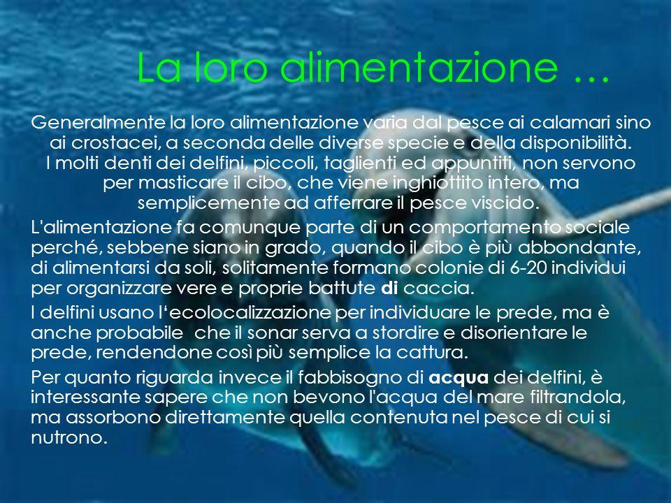 La loro alimentazione … Generalmente la loro alimentazione varia dal pesce ai calamari sino ai crostacei, a seconda delle diverse specie e della disponibilità.