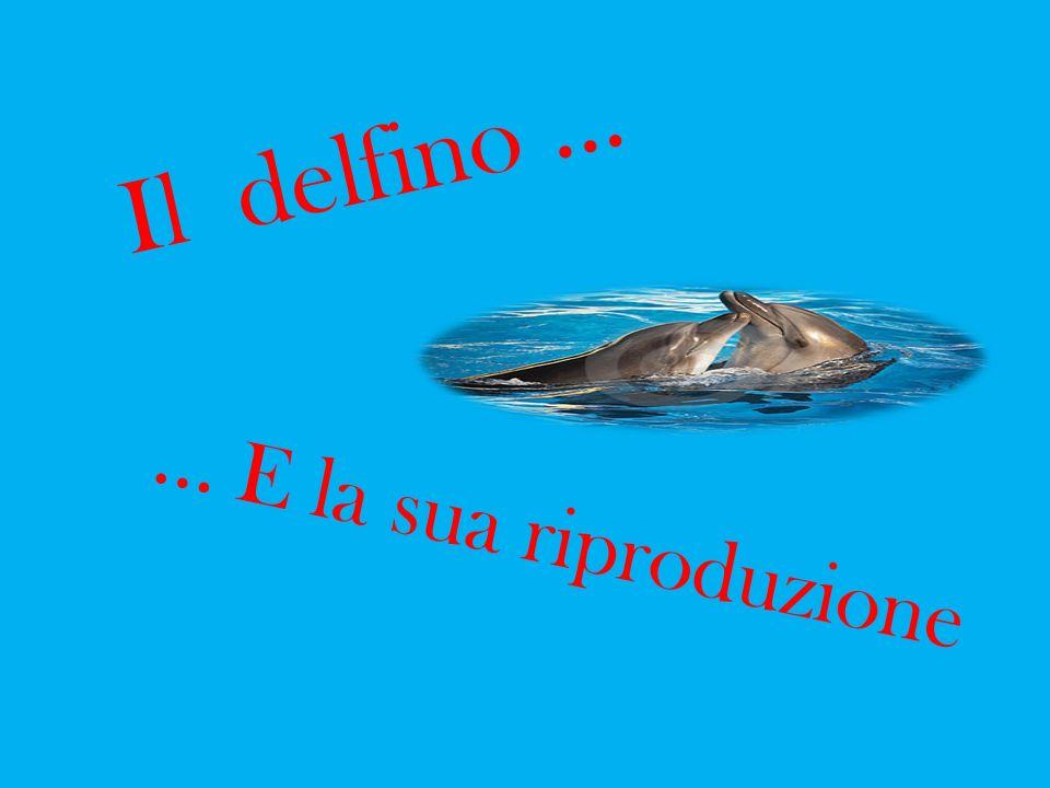 Il delfino …... E la sua riproduzione