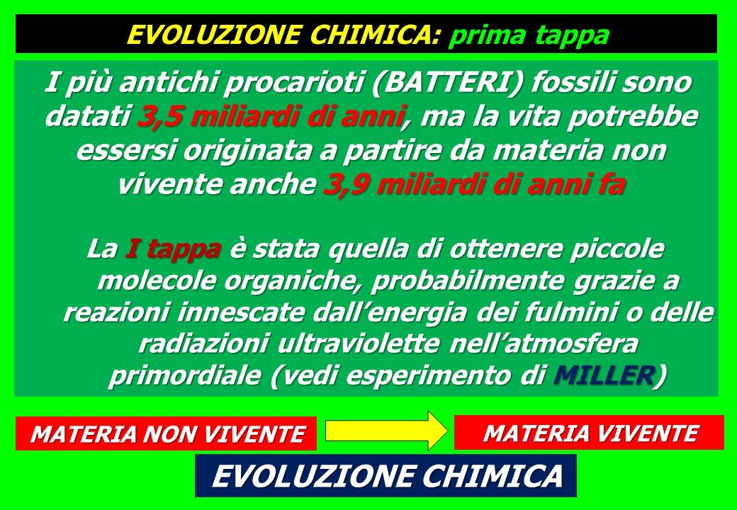 I più antichi procarioti (BATTERI) fossili sono datati 3,5 miliardi di anni, ma la vita potrebbe essersi originata a partire da materia non vivente anche 3,9 miliardi di anni fa La I tappa è stata quella di ottenere piccole molecole organiche, probabilmente grazie a reazioni innescate dallenergia dei fulmini o delle radiazioni ultraviolette nellatmosfera primordiale (vedi esperimento di MILLER) MATERIA NON VIVENTE MATERIA VIVENTE EVOLUZIONE CHIMICA EVOLUZIONE CHIMICA: prima tappa