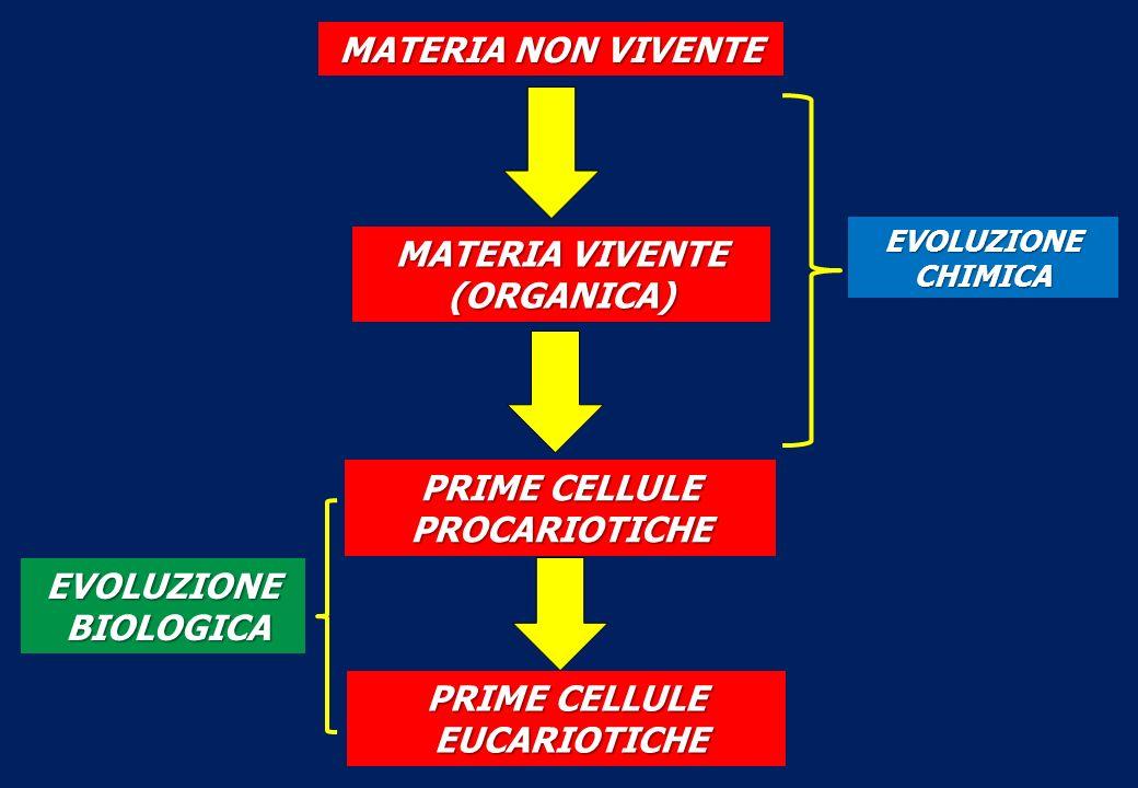 MATERIA NON VIVENTE MATERIA VIVENTE (ORGANICA) EVOLUZIONECHIMICA PRIME CELLULE PROCARIOTICHE EVOLUZIONE BIOLOGICA BIOLOGICA PRIME CELLULE EUCARIOTICHE EUCARIOTICHE