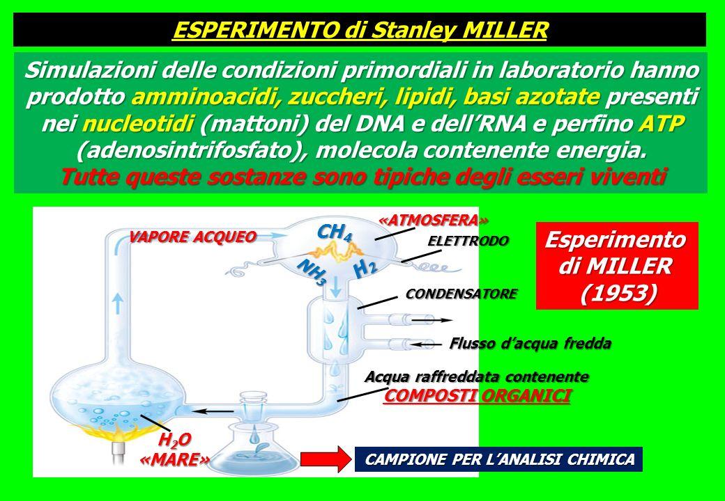 Acqua raffreddata contenente COMPOSTI ORGANICI Flusso dacqua fredda CONDENSATORE CAMPIONE PER LANALISI CHIMICA H 2 O «MARE» VAPORE ACQUEO «ATMOSFERA» ELETTRODO CH 4 NH 3 H2H2H2H2 Esperimento di MILLER (1953) Simulazioni delle condizioni primordiali in laboratorio hanno prodotto amminoacidi, zuccheri, lipidi, basi azotate presenti nei nucleotidi (mattoni) del DNA e dellRNA e perfino ATP (adenosintrifosfato), molecola contenente energia.