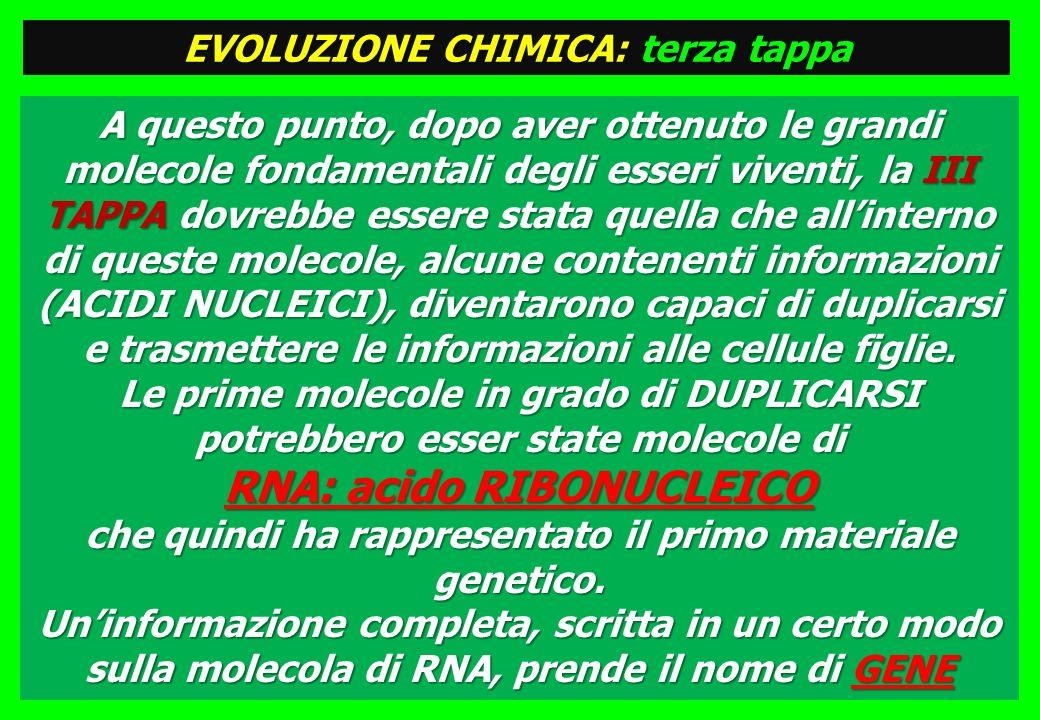 A questo punto, dopo aver ottenuto le grandi molecole fondamentali degli esseri viventi, la III TAPPA dovrebbe essere stata quella che allinterno di queste molecole, alcune contenenti informazioni (ACIDI NUCLEICI), diventarono capaci di duplicarsi e trasmettere le informazioni alle cellule figlie.