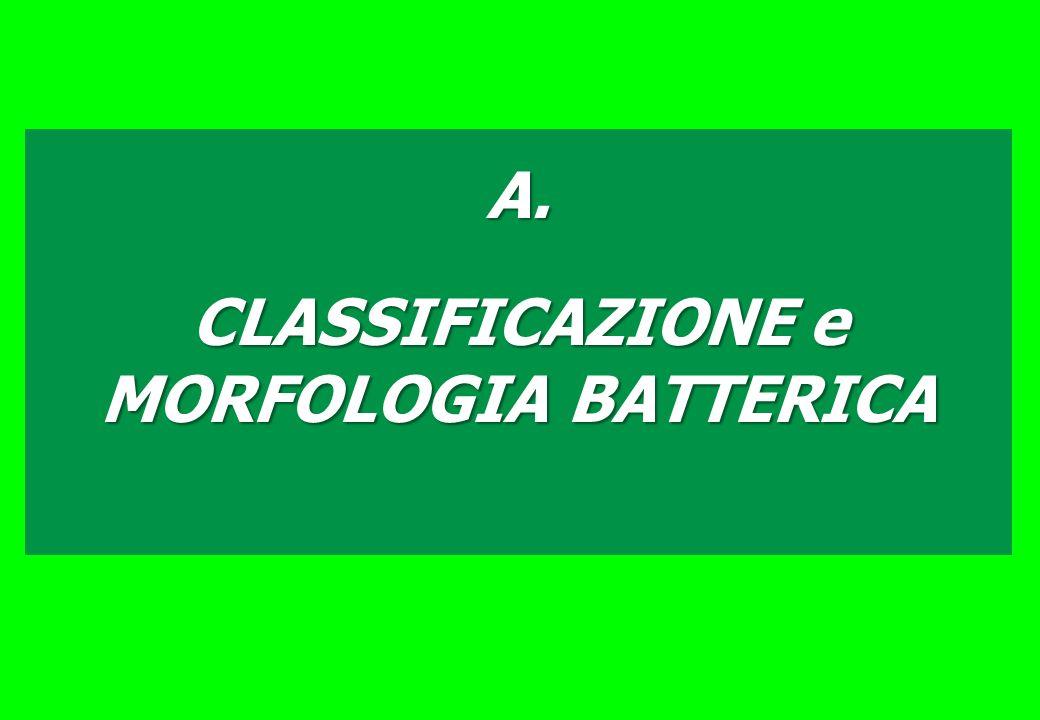 A. CLASSIFICAZIONE e MORFOLOGIA BATTERICA