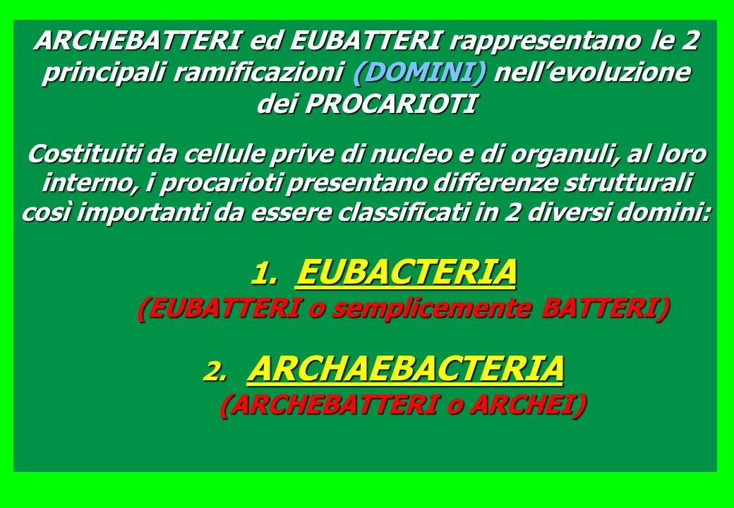 ARCHEBATTERI ed EUBATTERI rappresentano le 2 principali ramificazioni (DOMINI) nellevoluzione dei PROCARIOTI Costituiti da cellule prive di nucleo e di organuli, al loro interno, i procarioti presentano differenze strutturali così importanti da essere classificati in 2 diversi domini: 1.