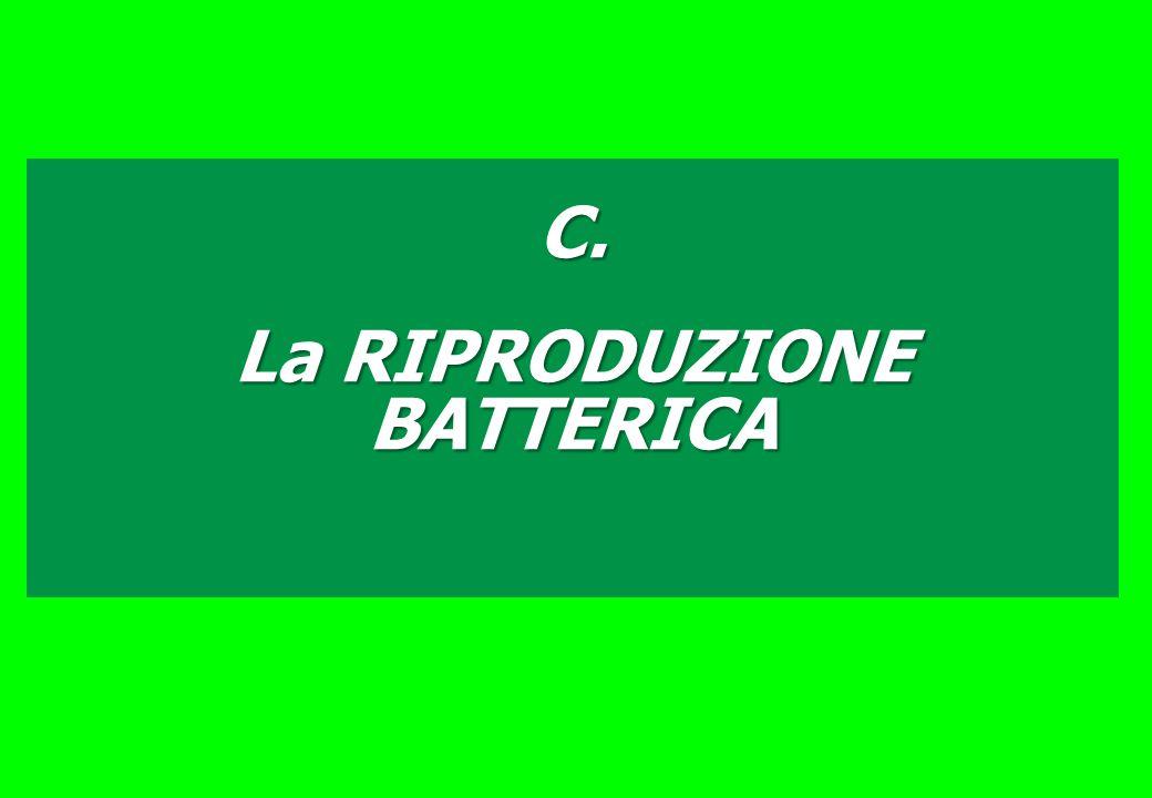 C. La RIPRODUZIONE BATTERICA