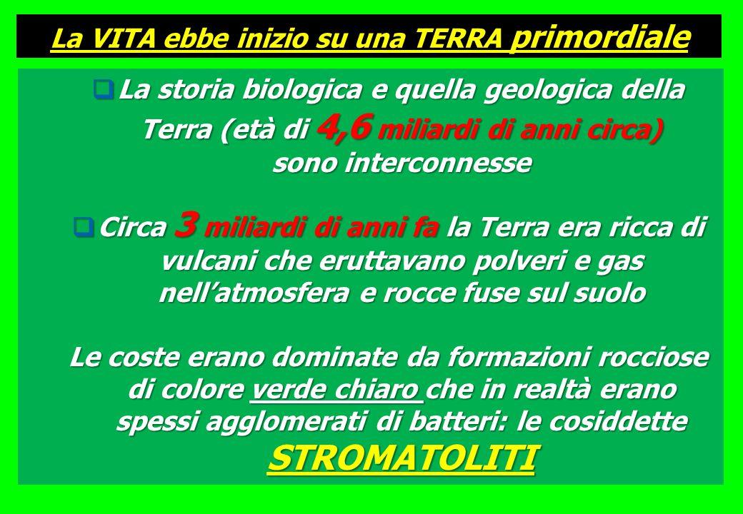 Latmosfera primordiale probabilmente conteneva H 2 O, CO (monossido di carbonio), CO 2, N 2 (azoto), e forse anche CH 4 (metano) e NH 3 (ammoniaca) mentre lossigeno era scarso o assente Lattività vulcanica e le radiazioni ultraviolette dovevano essere molto intense STROMATOLITI