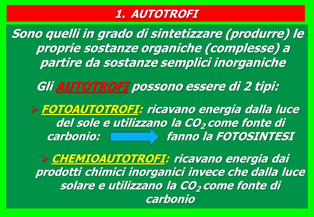 Sono quelli in grado di sintetizzare (produrre) le proprie sostanze organiche (complesse) a partire da sostanze semplici inorganiche Gli AUTOTROFI possono essere di 2 tipi: FOTOAUTOTROFI: ricavano energia dalla luce del sole e utilizzano la CO 2 come fonte di carbonio: fanno la FOTOSINTESI FOTOAUTOTROFI: ricavano energia dalla luce del sole e utilizzano la CO 2 come fonte di carbonio: fanno la FOTOSINTESI CHEMIOAUTOTROFI: ricavano energia dai prodotti chimici inorganici invece che dalla luce solare e utilizzano la CO 2 come fonte di carbonio CHEMIOAUTOTROFI: ricavano energia dai prodotti chimici inorganici invece che dalla luce solare e utilizzano la CO 2 come fonte di carbonio 1.AUTOTROFI