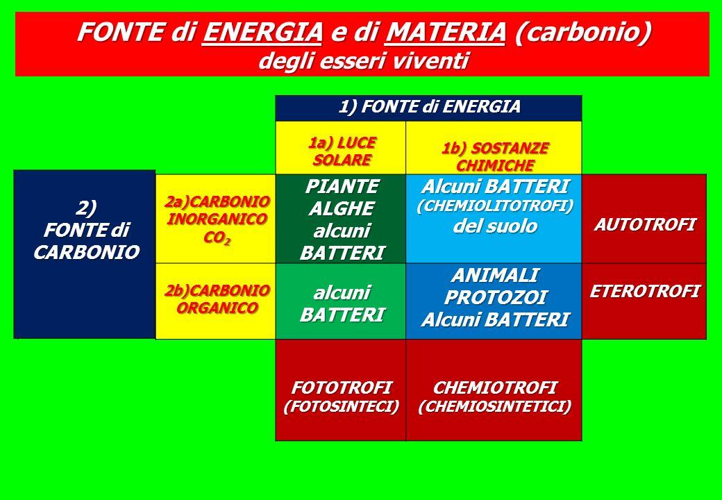 1) FONTE di ENERGIA 1a) LUCE SOLARE 1b) SOSTANZE CHIMICHE 2a)CARBONIO INORGANICO CO 2 PIANTEALGHE alcuni BATTERI Alcuni BATTERI (CHEMIOLITOTROFI) del suolo AUTOTROFI 2b)CARBONIO ORGANICO alcuni BATTERI ANIMALIPROTOZOI Alcuni BATTERI ETEROTROFI FOTOTROFI(FOTOSINTECI) CHEMIOTROFI (CHEMIOSINTETICI) FONTE di ENERGIA e di MATERIA (carbonio) degli esseri viventi 2) FONTE di CARBONIO