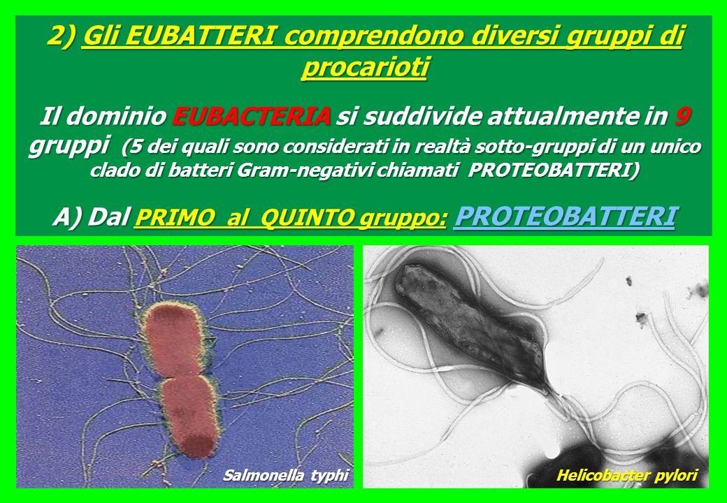 2) Gli EUBATTERI comprendono diversi gruppi di procarioti Il dominio EUBACTERIA si suddivide attualmente in 9 gruppi (5 dei quali sono considerati in realtà sotto-gruppi di un unico clado di batteri Gram-negativi chiamati PROTEOBATTERI) A) Dal PRIMO al QUINTO gruppo: PROTEOBATTERI Helicobacter pylori Salmonella typhi