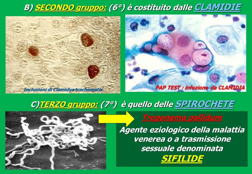 B) SECONDO gruppo: (6°) è costituito dalle CLAMIDIE C)TERZO gruppo: (7°) è quello delle SPIROCHETE Inclusioni di Clamidya trachomatis PAP TEST : infezione da CLAMIDIA Treponema pallidum Agente eziologico della malattia venerea o a trasmissione sessuale denominata SIFILIDE
