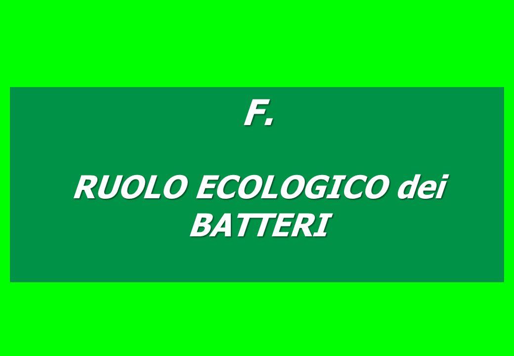 F. RUOLO ECOLOGICO dei BATTERI