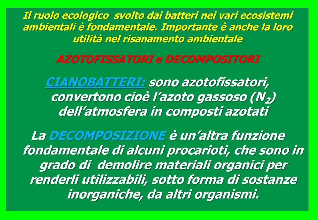 Il ruolo ecologico svolto dai batteri nei vari ecosistemi ambientali è fondamentale.