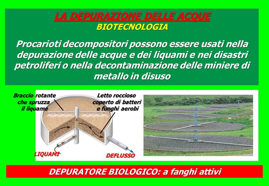 DEPURATORE BIOLOGICO: a fanghi attivi LIQUAMI DEFLUSSO Braccio rotante che spruzza il liquame Letto roccioso coperto di batteri e funghi aerobi LA DEPURAZIONE DELLE ACQUE BIOTECNOLOGIA Procarioti decompositori possono essere usati nella depurazione delle acque e dei liquami e nei disastri petroliferi o nella decontaminazione delle miniere di metallo in disuso