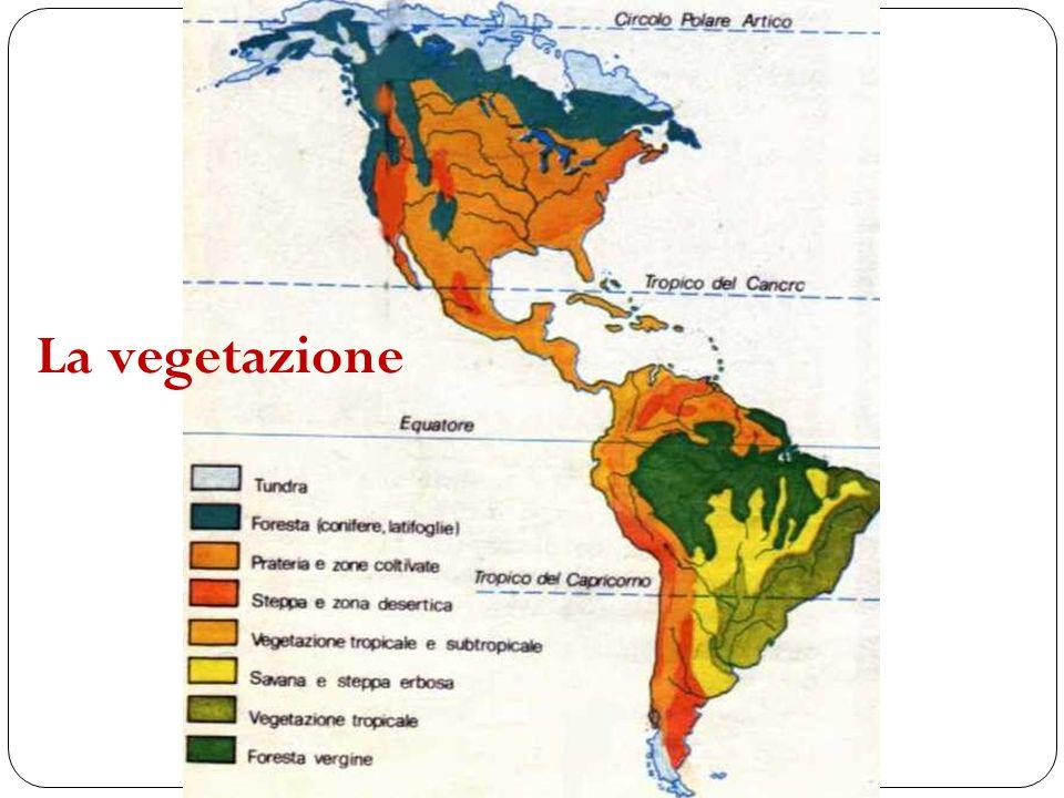 La vegetazione