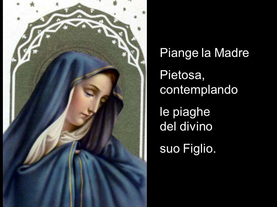 Piange la Madre Pietosa, contemplando le piaghe del divino suo Figlio.