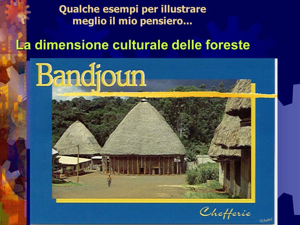 Qualche esempi per illustrare meglio il mio pensiero... La dimensione culturale delle foreste