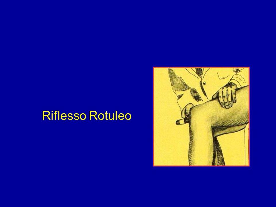 Riflesso Rotuleo