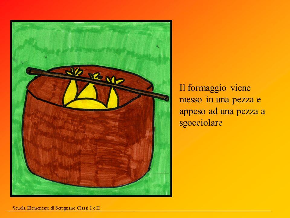 Scuola Elementare di Seregnano Classi I e II Il formaggio viene messo in una pezza e appeso ad una pezza a sgocciolare