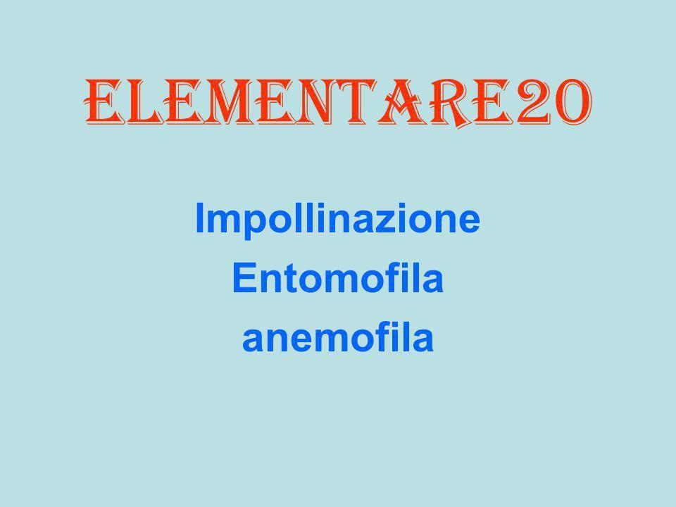 elementare20 Impollinazione Entomofila anemofila