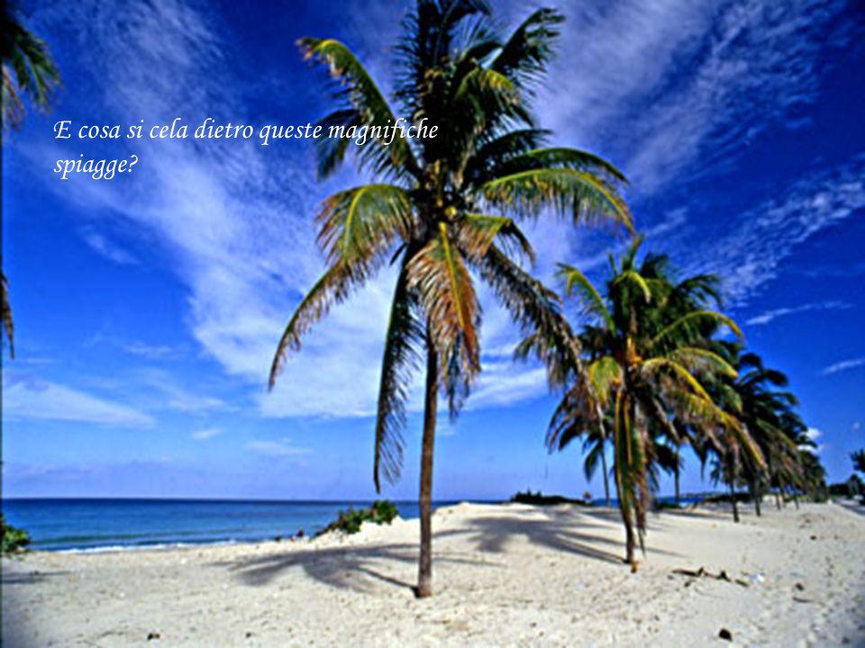E cosa si cela dietro queste magnifiche spiagge?