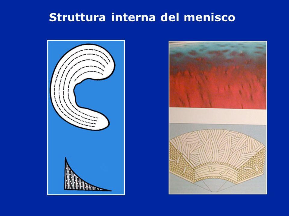 Struttura interna del menisco