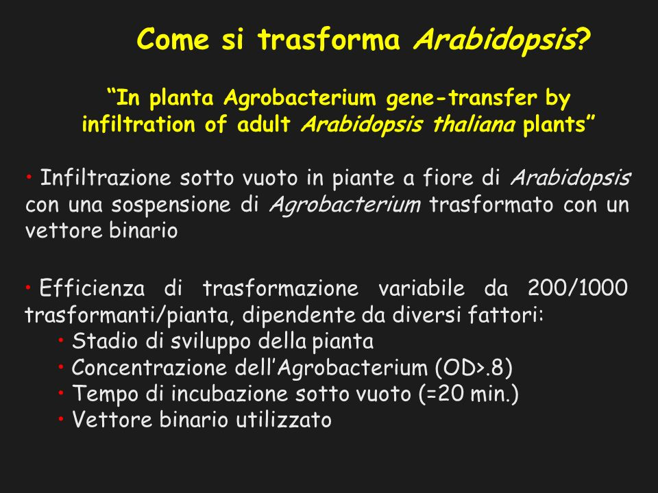Come si trasforma Arabidopsis? In planta Agrobacterium gene-transfer by infiltration of adult Arabidopsis thaliana plants Infiltrazione sotto vuoto in
