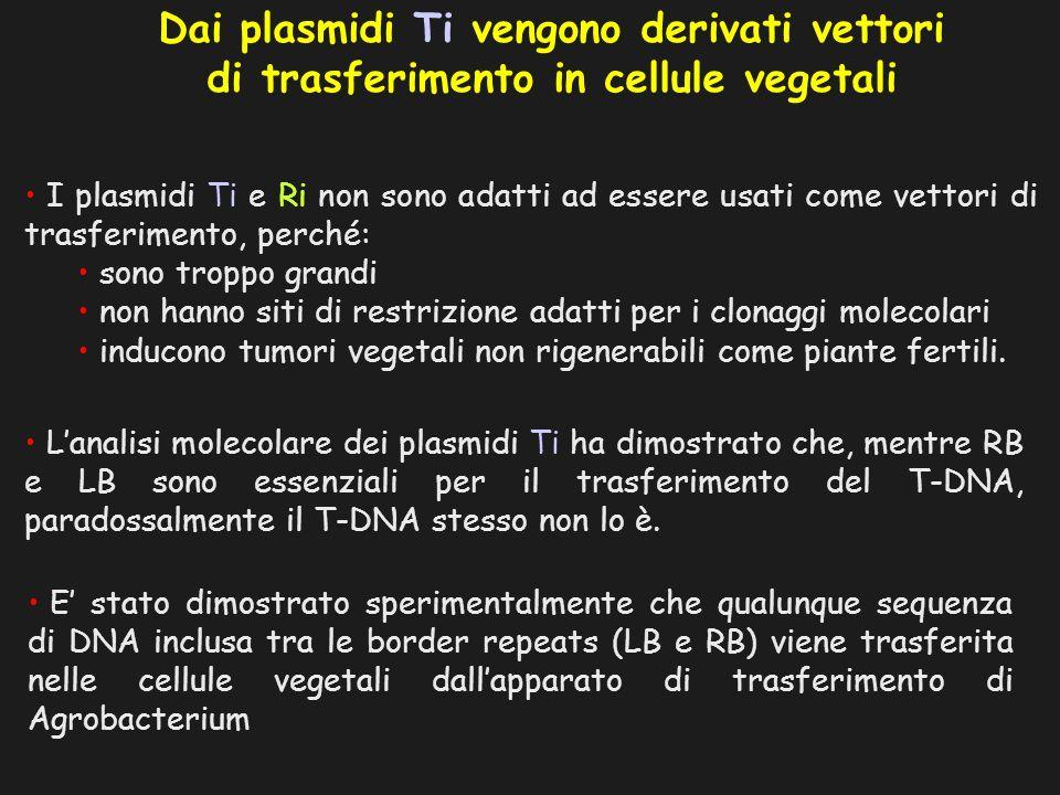 I plasmidi Ti e Ri non sono adatti ad essere usati come vettori di trasferimento, perché: sono troppo grandi non hanno siti di restrizione adatti per