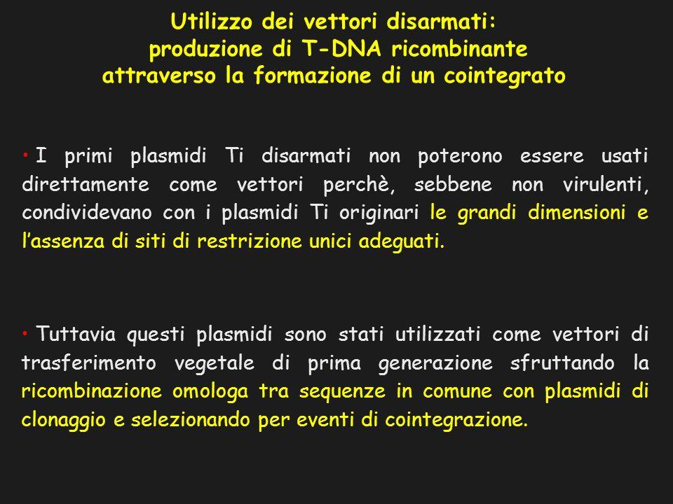 I primi plasmidi Ti disarmati non poterono essere usati direttamente come vettori perchè, sebbene non virulenti, condividevano con i plasmidi Ti origi