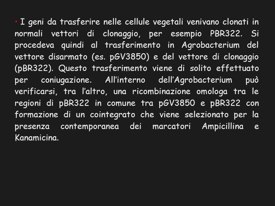 I geni da trasferire nelle cellule vegetali venivano clonati in normali vettori di clonaggio, per esempio PBR322. Si procedeva quindi al trasferimento