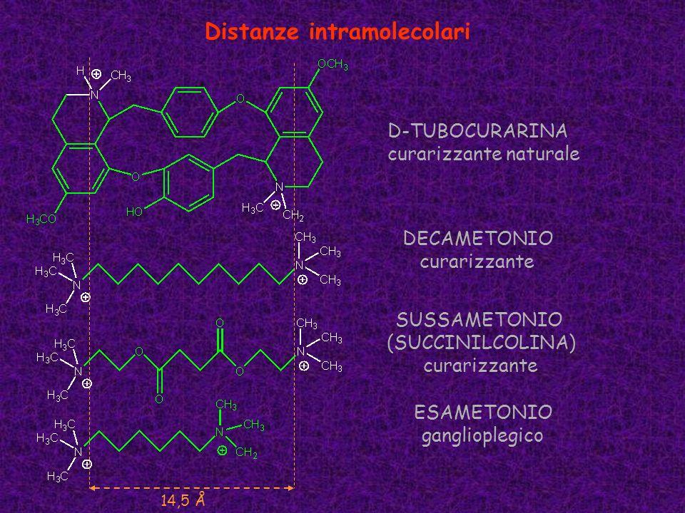 Distanze intramolecolari DECAMETONIO curarizzante SUSSAMETONIO (SUCCINILCOLINA) curarizzante D-TUBOCURARINA curarizzante naturale ESAMETONIO gangliopl