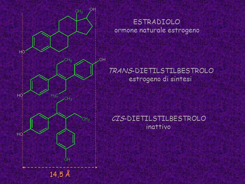 ESTRADIOLO ormone naturale estrogeno TRANS-DIETILSTILBESTROLO estrogeno di sintesi CIS-DIETILSTILBESTROLO inattivo 14,5 Å