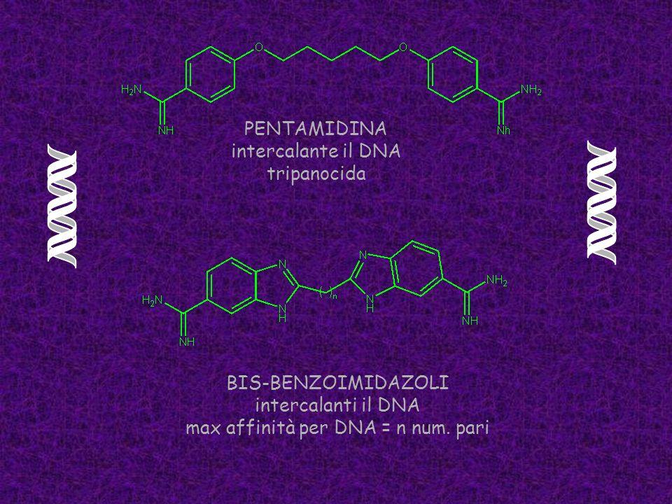 PENTAMIDINA intercalante il DNA tripanocida BIS-BENZOIMIDAZOLI intercalanti il DNA max affinità per DNA = n num. pari