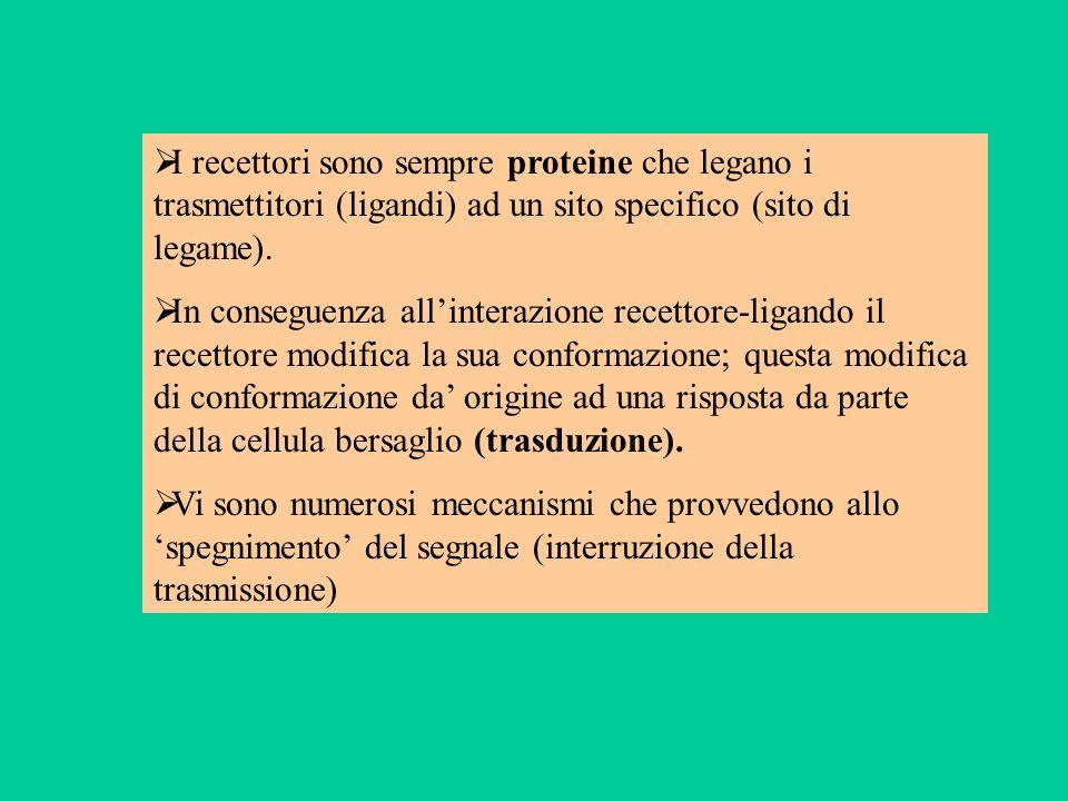 I recettori sono sempre proteine che legano i trasmettitori (ligandi) ad un sito specifico (sito di legame). In conseguenza allinterazione recettore-l