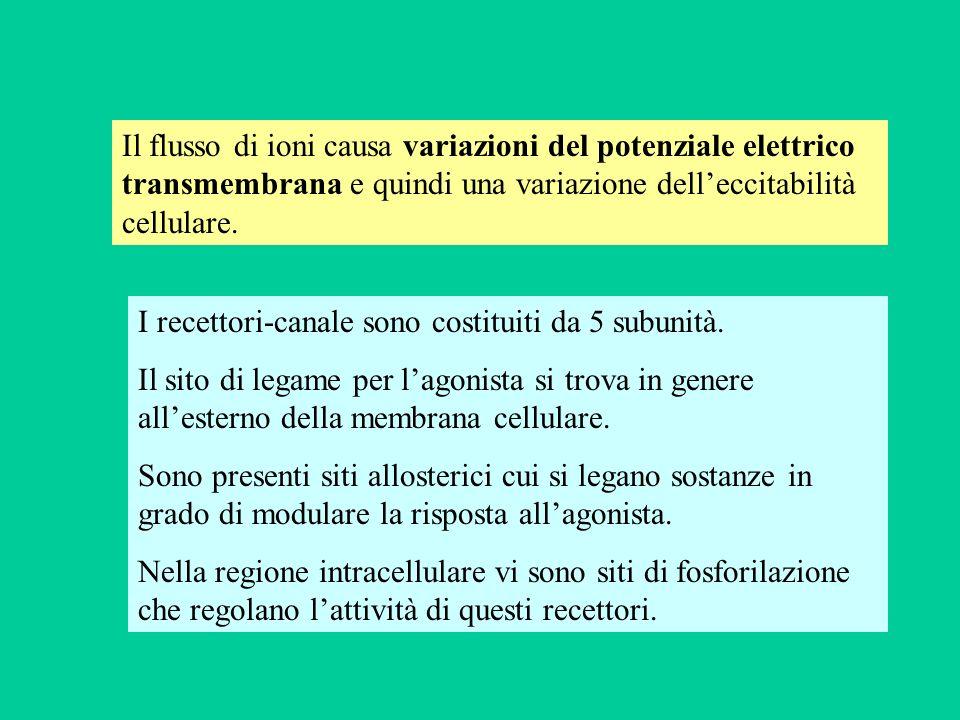 Il flusso di ioni causa variazioni del potenziale elettrico transmembrana e quindi una variazione delleccitabilità cellulare. I recettori-canale sono